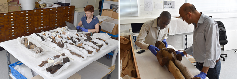 Katrina Dring, George Agbo and Paul Basu working with the Northcote Thomas collection, Cambridge Museum of Archaeology and Anthropology