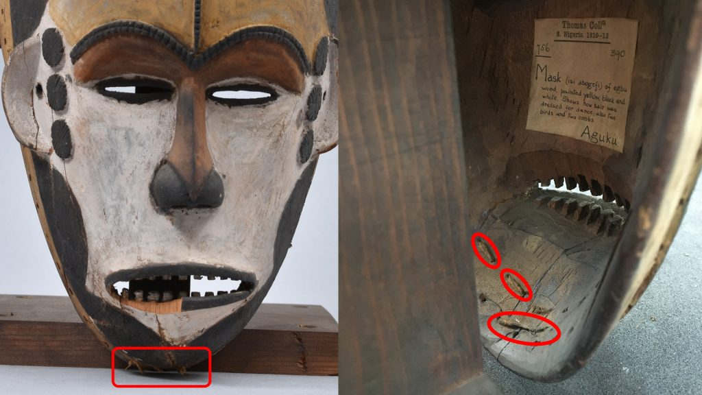 Maiden spirit mask collected by Northcote Thomas in Agukwu Nri, Nigeria. Noting remains of costume attached.