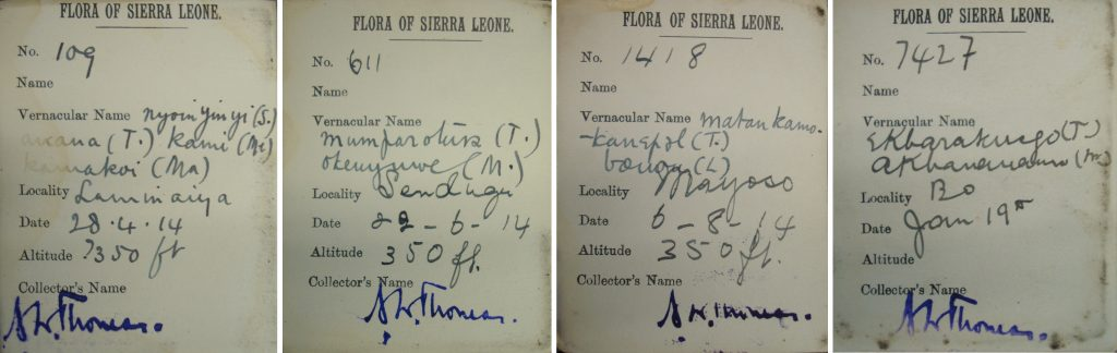 Northcote Thomas Flora of Sierra Leone specimen labels