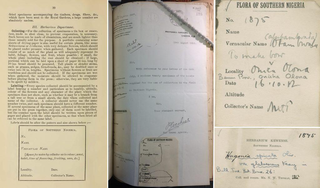 Northcote Thomas Flora of Southern Nigeria Herbarium Specimen Labels