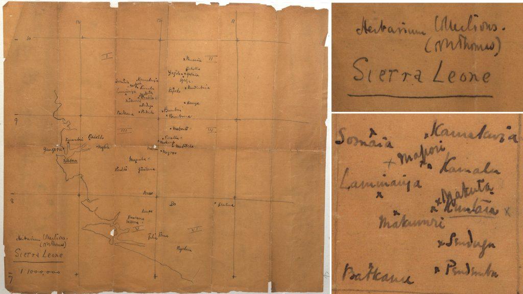 Northcote Thomas Sierra Leone herbarium specimen map 1914-15