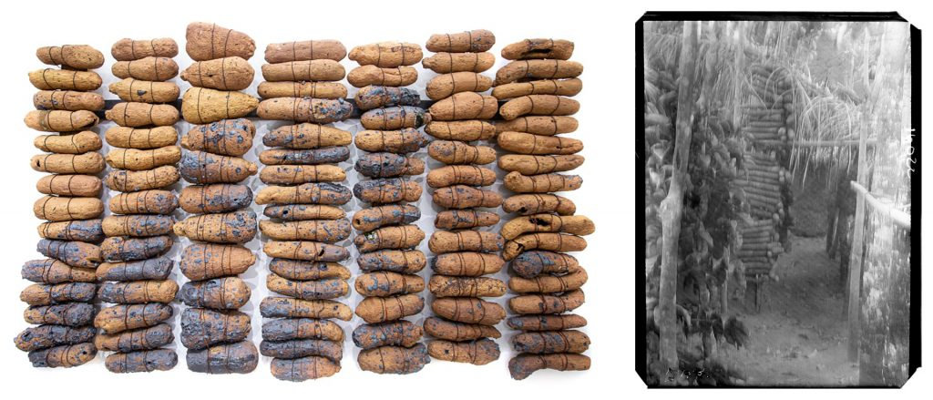 Ozioma Onuzulike, Seed Yams of Our Land and Northcote Thomas photograph of yams in stack